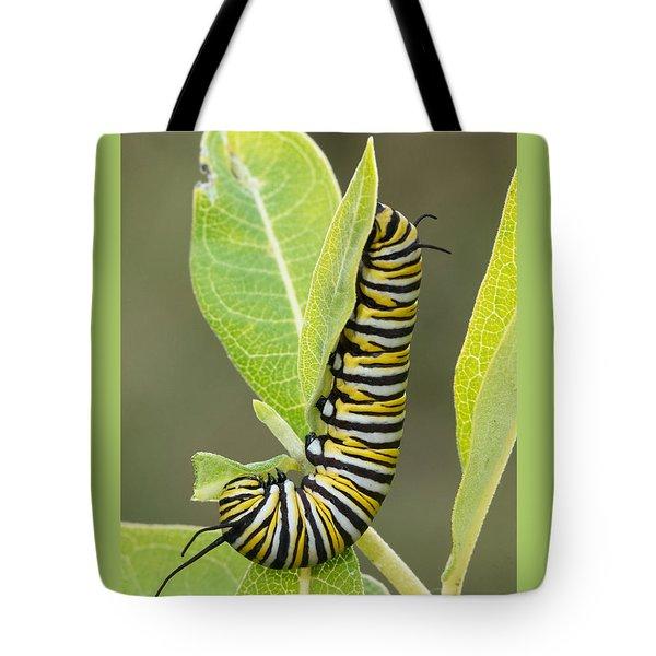 Late Season Monarch Tote Bag