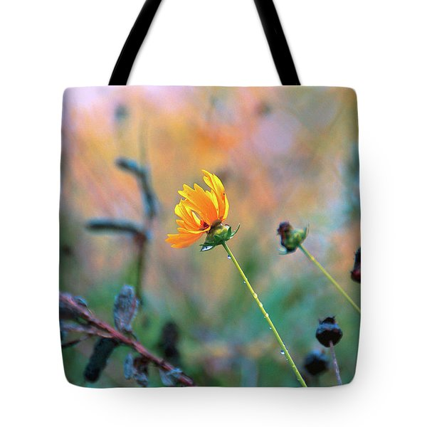 Late Summer Rain From The Forest Floor Tote Bag by Bob Orsillo