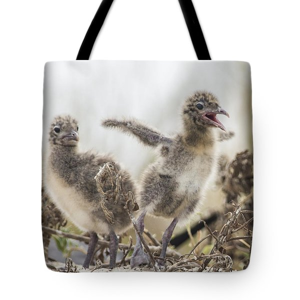 Tote Bag featuring the photograph Laughing Gull Chicks by Paula Porterfield-Izzo