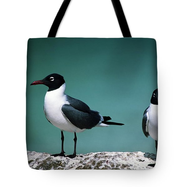 Laughing Gulls Tote Bag by Sally Weigand
