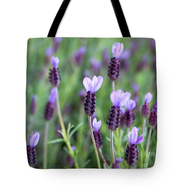 Tote Bag featuring the photograph Lavender by Erin Kohlenberg