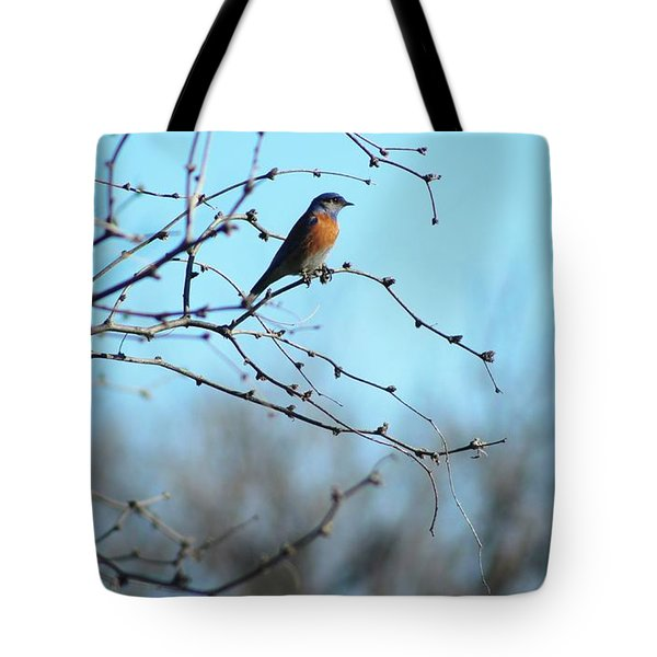 Lazuli Bunting Looks Out Tote Bag