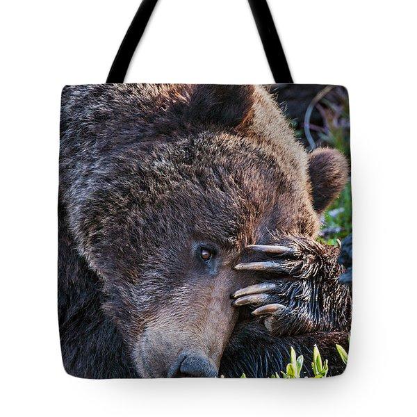 Lazy Bear Tote Bag