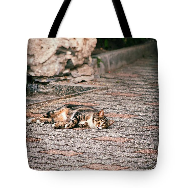 Tote Bag featuring the photograph Lazy Cat    by Silvia Ganora