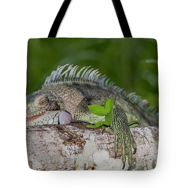 Tote Bag featuring the photograph Lazy Iguana by Rachel Lee Young