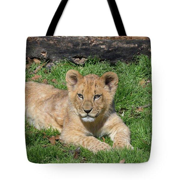 Lazy Little Leo Tote Bag
