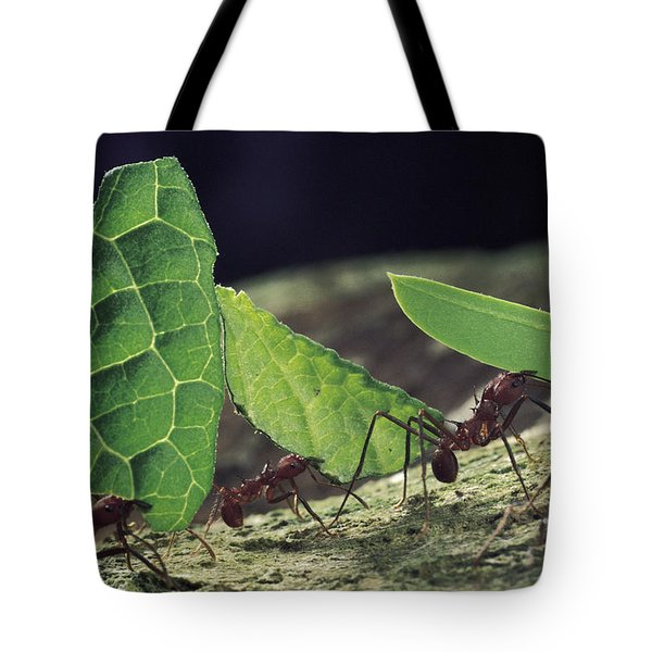 Leafcutter Ant Atta Cephalotes Workers Tote Bag by Mark Moffett