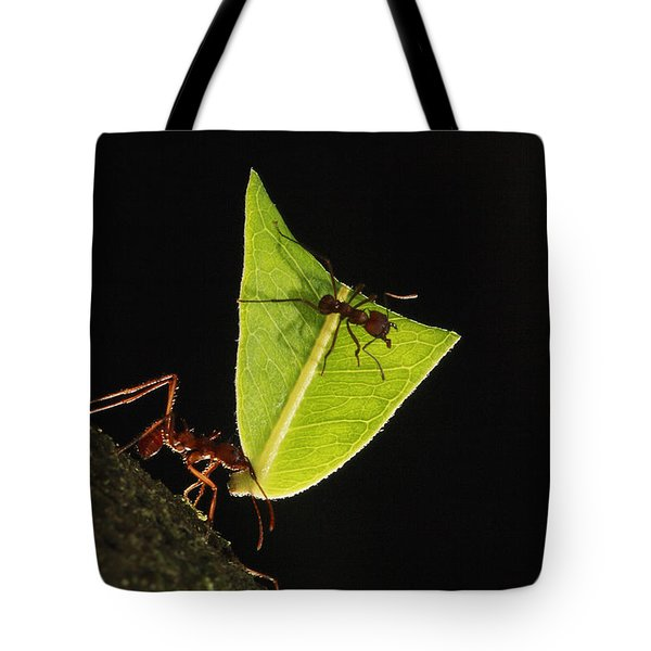 Leafcutter Ant Atta Sp Carrying Leaf Tote Bag by Cyril Ruoso