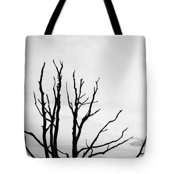 Leafless Tree Tote Bag