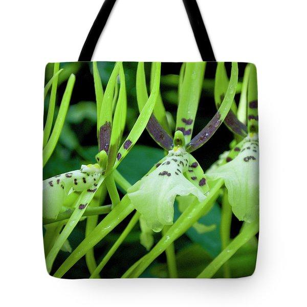 Leap Frog Tote Bag
