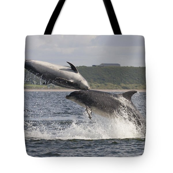 Leaping Bottlenose Dolphins - Scotland  #38 Tote Bag