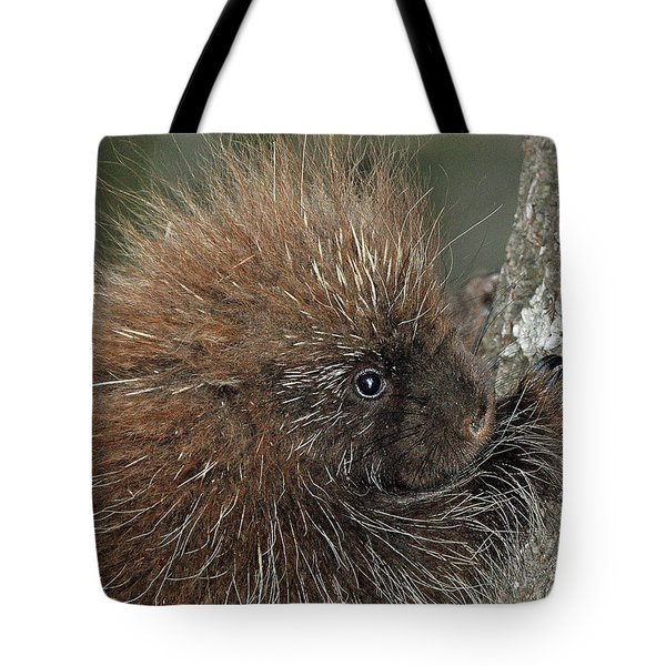 Learning To Climb Tote Bag by Glenn Gordon