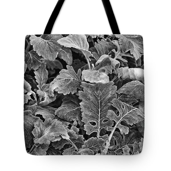 Tote Bag featuring the photograph Leaves, Black And White by Richard Goldman
