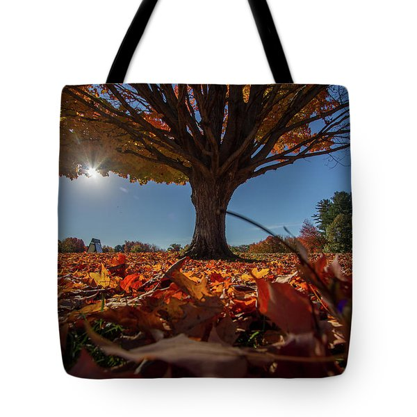 Tote Bag featuring the photograph Leaves by Darryl Hendricks
