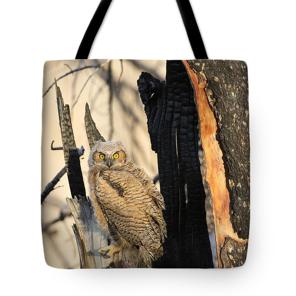 Tote Bag featuring the photograph Leaving The Nest by Aaron Whittemore