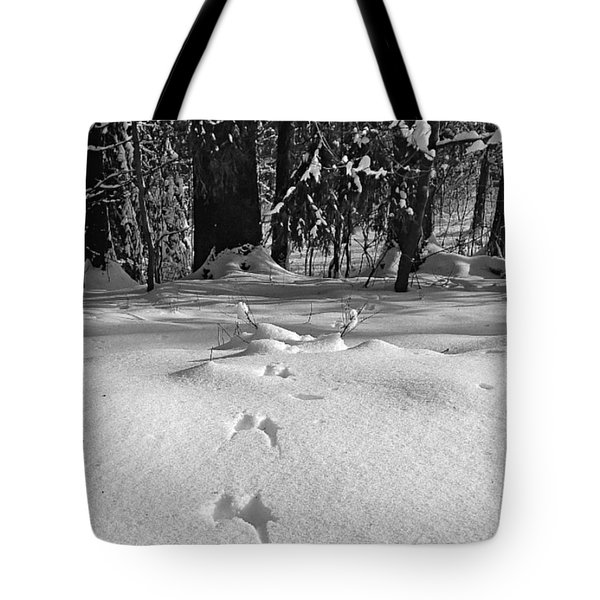 Leaving Traces