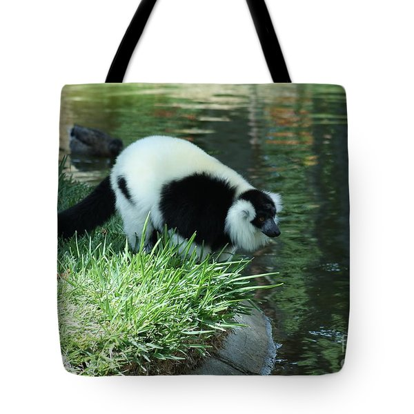 Tote Bag featuring the photograph Lemur Admiring Himself by Craig Wood