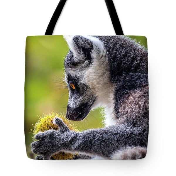 Lemur And Sweet Chestnut Tote Bag