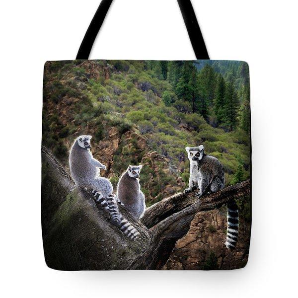 Lemur Family Tote Bag