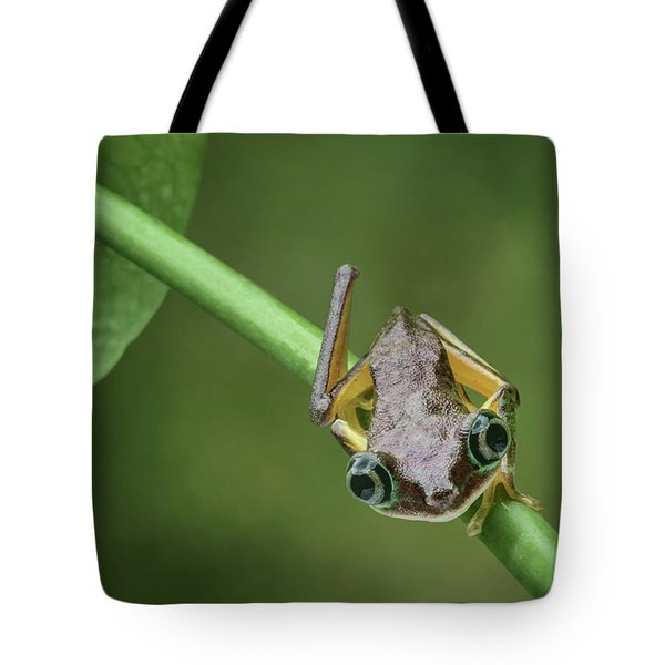 Tote Bag featuring the photograph Lemur Tree Frog - 1 by Nikolyn McDonald