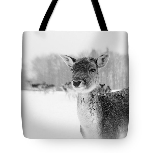 #lensbaby #composerpro #sweet35 Tote Bag