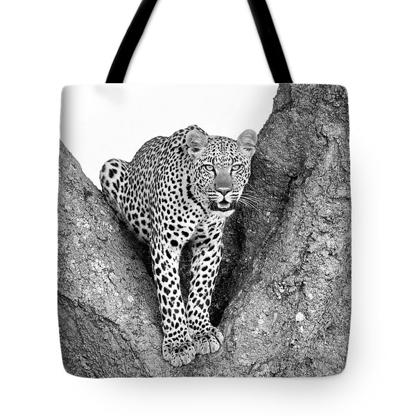 Leopard In A Tree Tote Bag by Richard Garvey-Williams