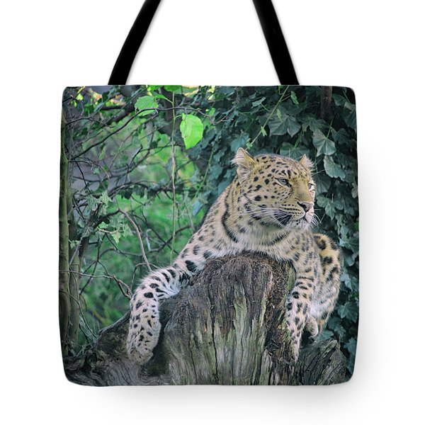 Leopard Lookout Tote Bag
