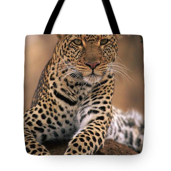 Leopard Panthera Pardus, Masai Mara Tote Bag by Anup Shah