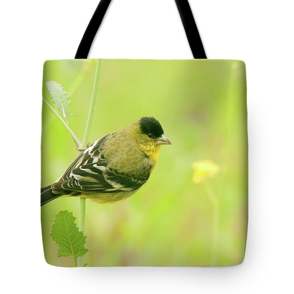 Tote Bag featuring the photograph Lesser Goldfinch  by Ram Vasudev