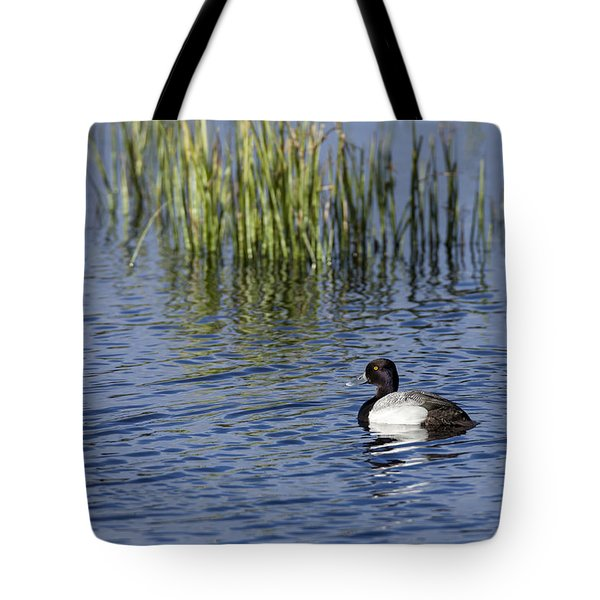 Lesser Scaup Adult Male Tote Bag