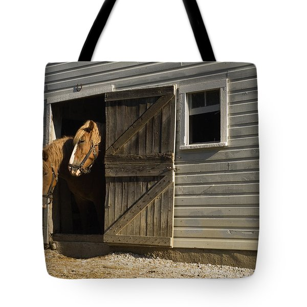 Let's Go Out Tote Bag by Sally Weigand
