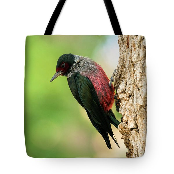 Lewis Woodpecker Tote Bag