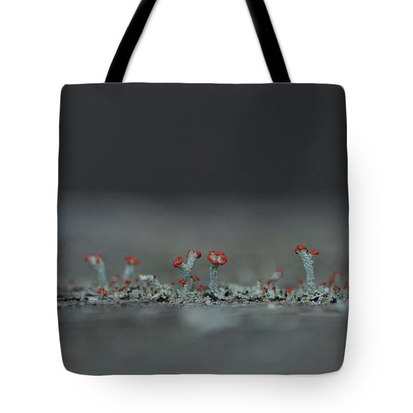 Lichen-scape Tote Bag by JD Grimes