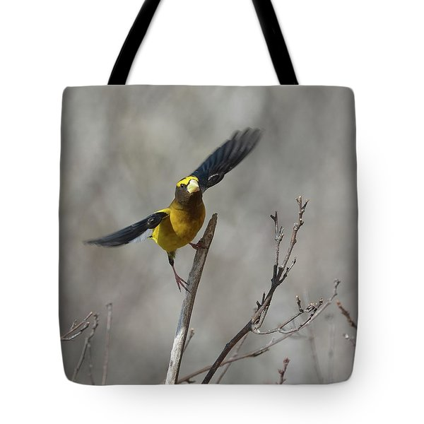 Liftoff-male Evening Grosbeak Tote Bag