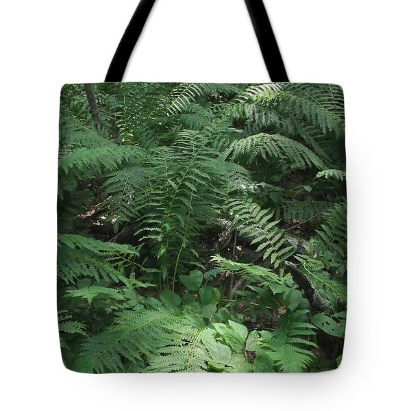 Light Finds The Forest Floor Tote Bag
