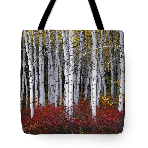 Light In Forest Tote Bag