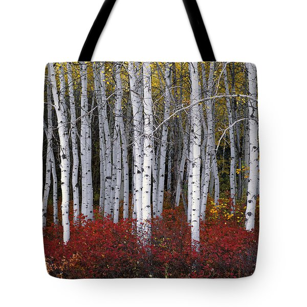 Light In Forest Tote Bag by Leland D Howard