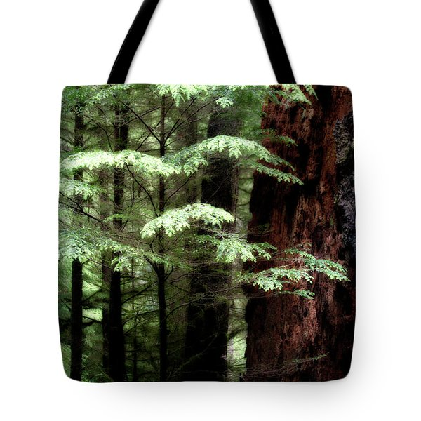 Light On Trees Tote Bag