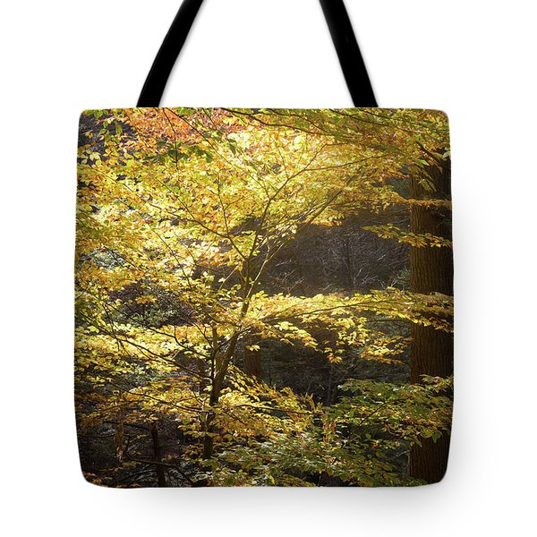 Light In The Leaves Tote Bag