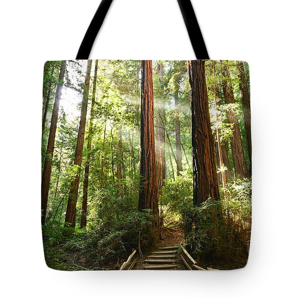 Light The Way - Redwood Forest Of Muir Woods National Monument With Sun Beam. Tote Bag
