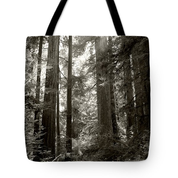 Light Through Redwoods Tote Bag by Kathleen Grace