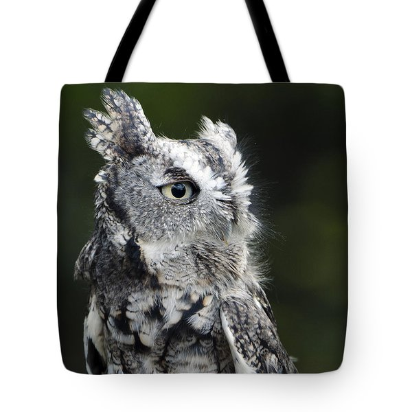 Tote Bag featuring the photograph Li'l Screech by Stephen Flint