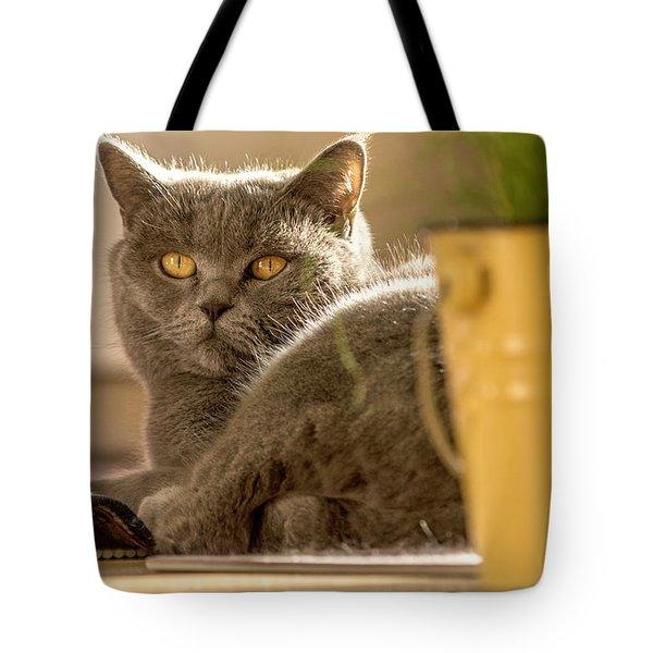 Lilli The Cat Tote Bag