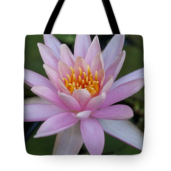 Lilly In Pink Tote Bag
