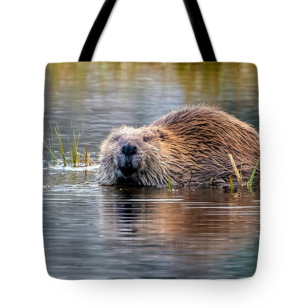 Lily Lake Beaver Tote Bag
