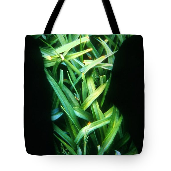 Lily Leaves Tote Bag by Arla Patch