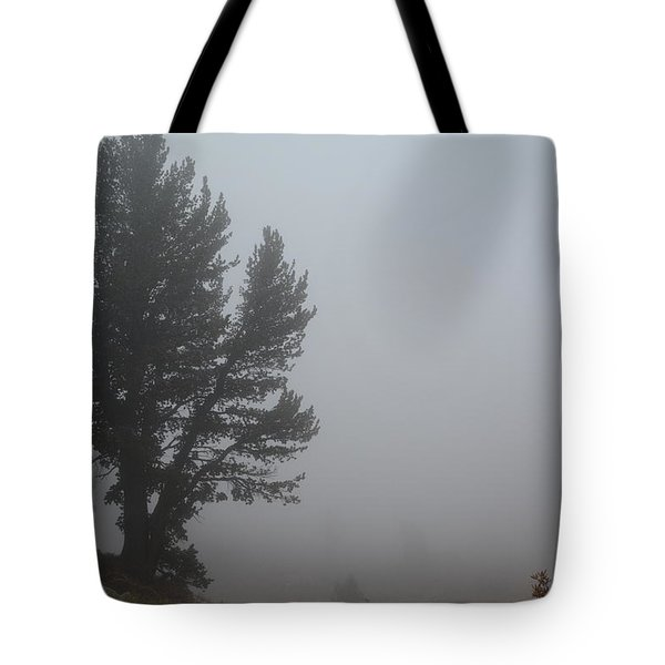 Limber Pine In Fog Tote Bag by Jenessa Rahn