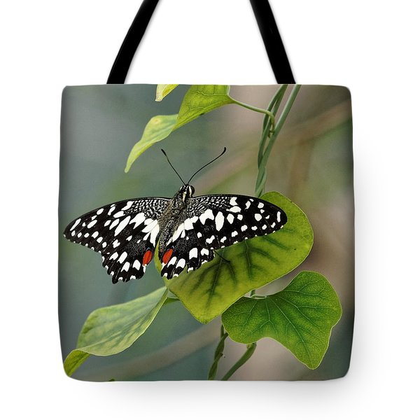 Tote Bag featuring the photograph Lime/chequered Swallowtail Butterfly by Paul Gulliver