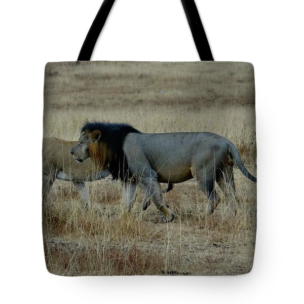 Lion And Pregnant Lioness Walking Tote Bag