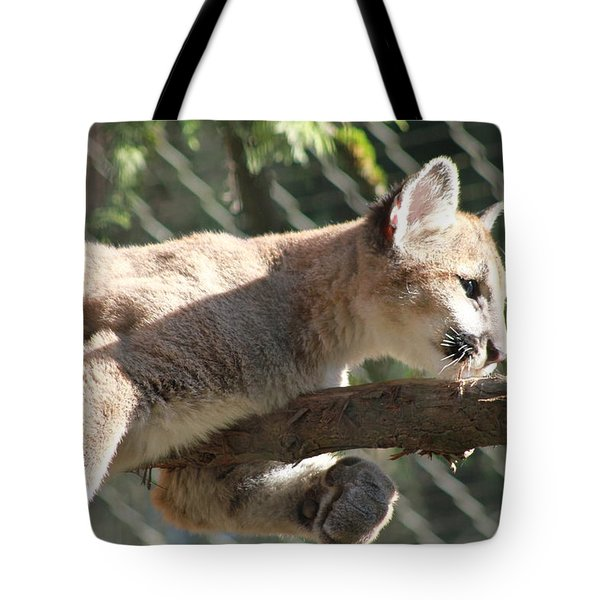 Tote Bag featuring the photograph Lion Around by Laddie Halupa